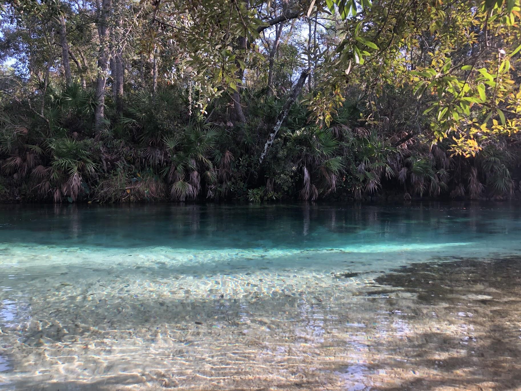 Crystal clear waters of Weeki Wachee River