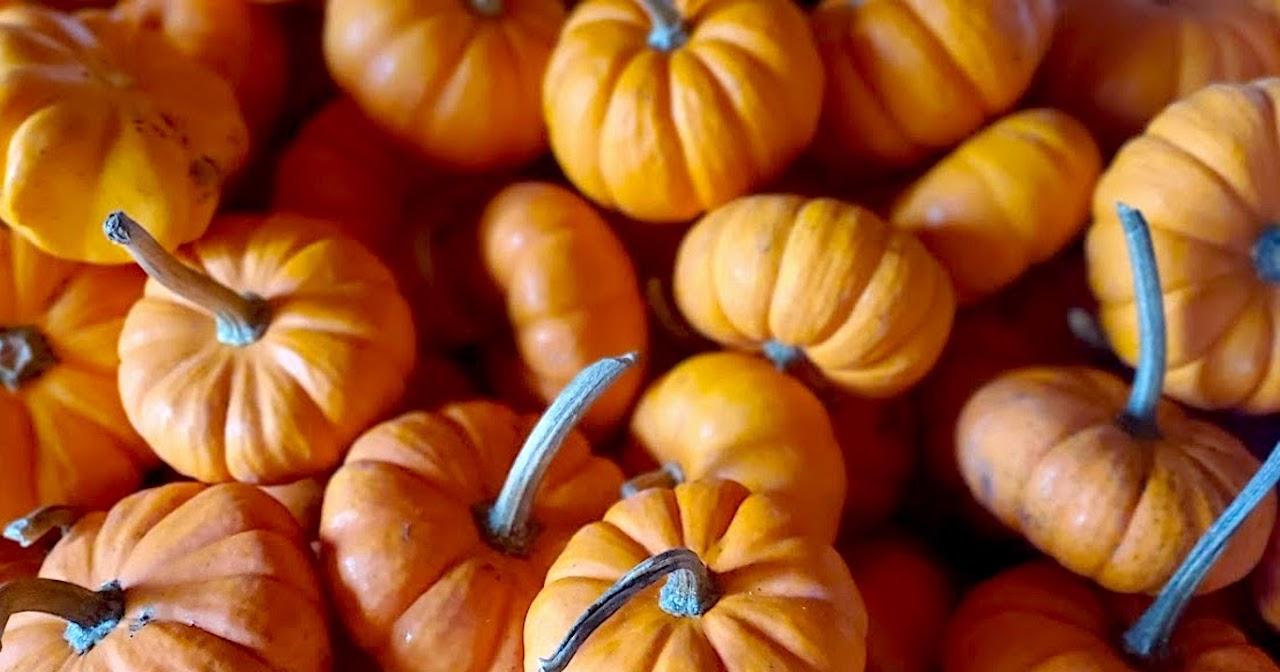 Fall time tampa bay
