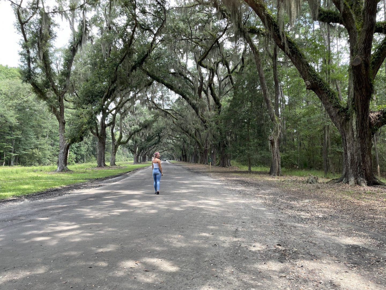 Wormsloe State Historic Site Savannah Georgia